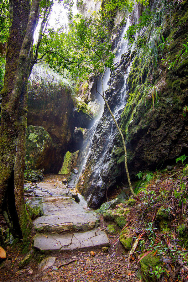 another place to shower, Springbrook National Park
