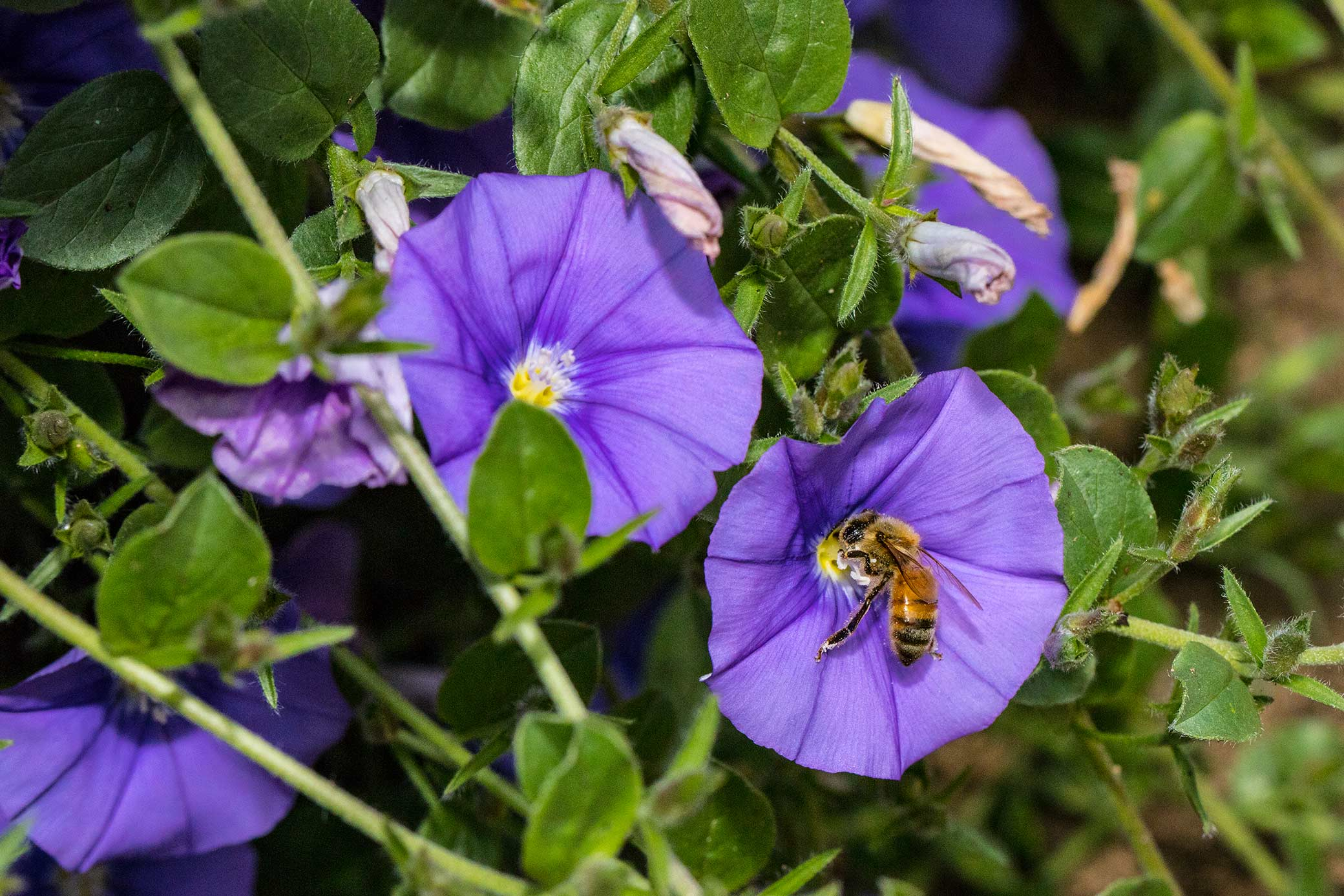 bees in purple