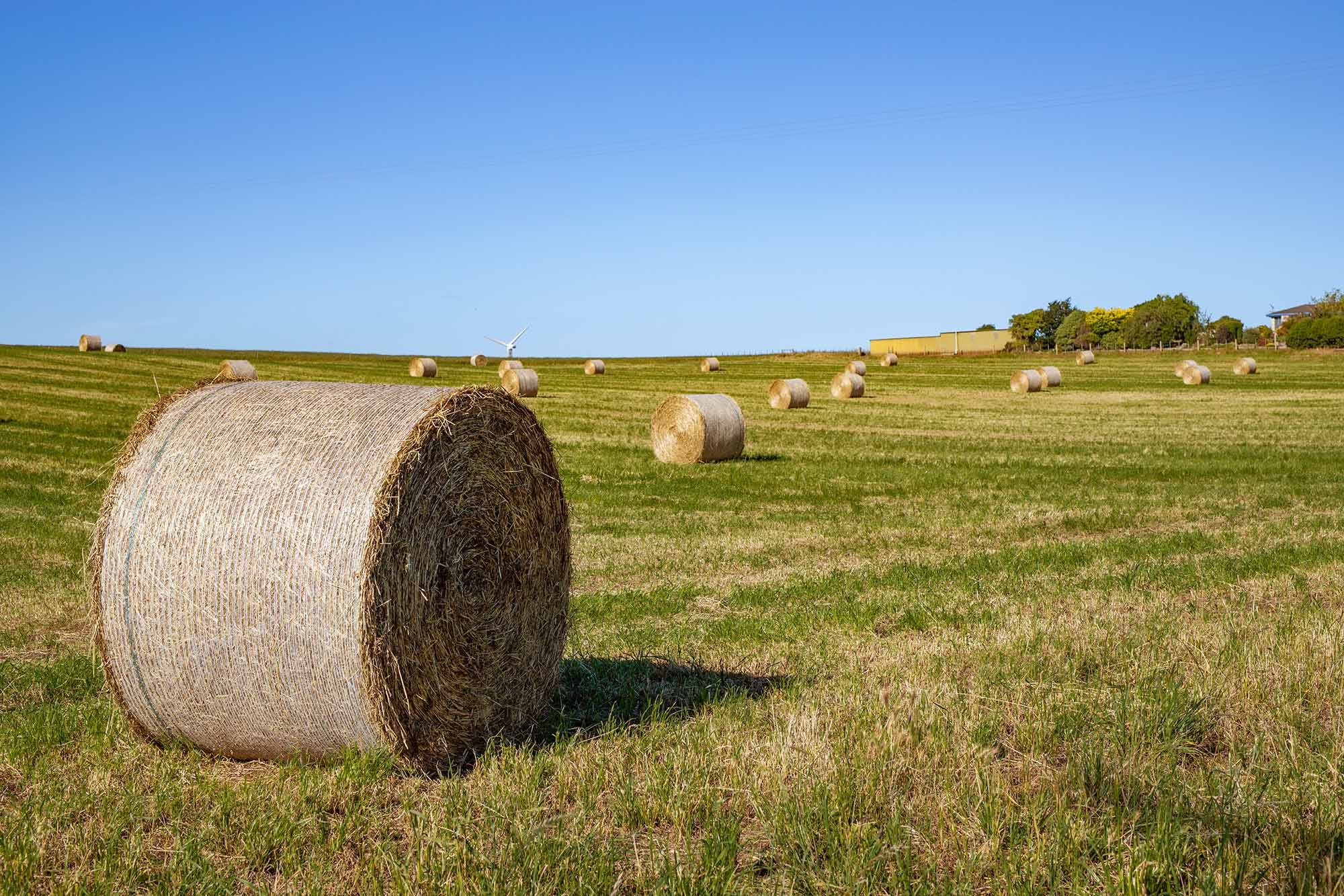 hay in the fields